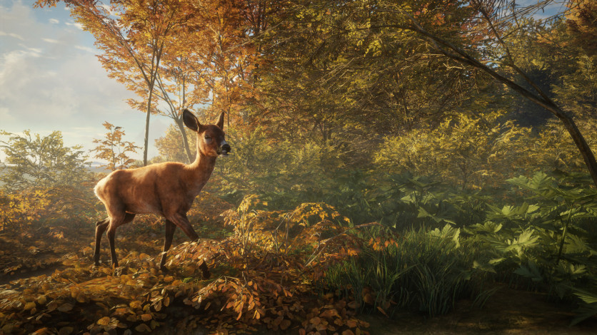 Screenshot 12 - theHunter: Call of the Wild