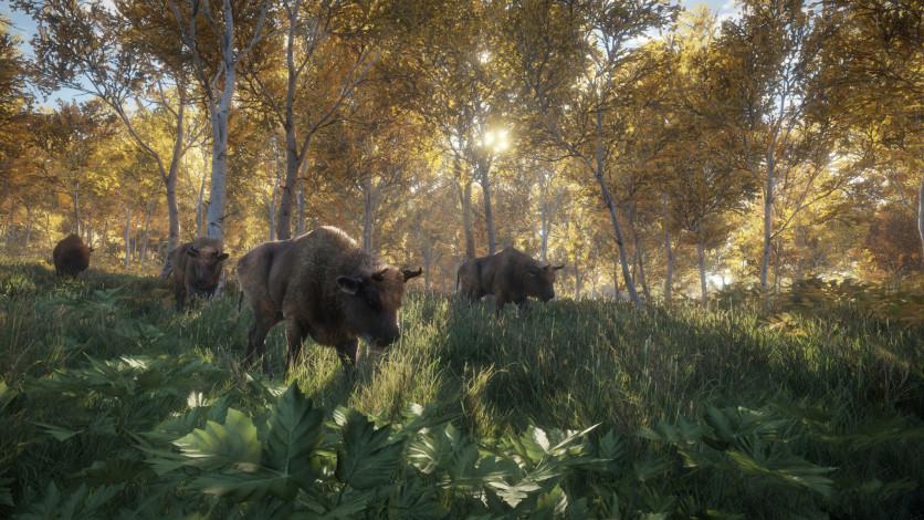 Screenshot 4 - theHunter: Call of the Wild