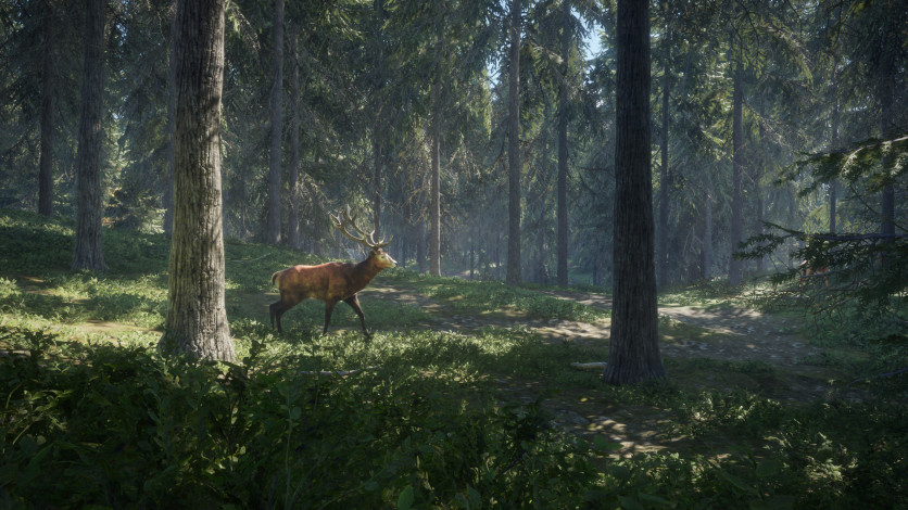 Screenshot 10 - theHunter: Call of the Wild