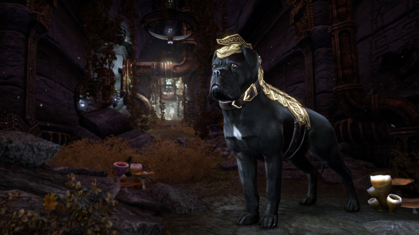 Screenshot 6 - The Elder Scrolls Online - Morrowind Digital Collector's Edition