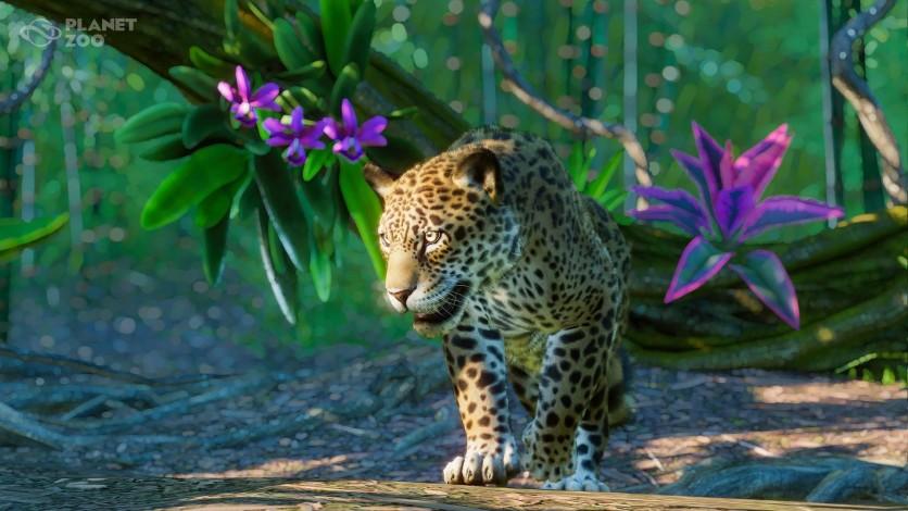 Screenshot 1 - Planet Zoo: South America Pack