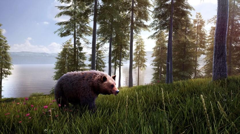 Screenshot 3 - Hunting Simulator 2 - Bear Hunter Pack