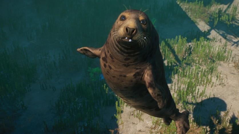 Screenshot 10 - Planet Zoo: Aquatic Pack